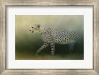 Cheetah On The Prowl Fine Art Print