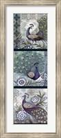 Peacock Blues Fine Art Print