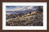 King Of The Hill - Elk Fine Art Print