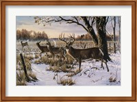 Cautious Crossing - Whitetails Fine Art Print