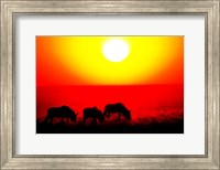 Wildebeests, Etosha National Park, Namibia Fine Art Print