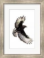 Long-Crested Eagle, Ndutu, Ngorongoro Conservation Area, Tanzania Fine Art Print