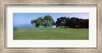 Trees on a Golf Course, Manua Kea, Hawaii Fine Art Print
