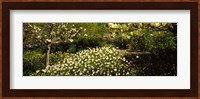 Flowers in Central Park, Manhattan, New York City Fine Art Print