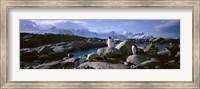 Penguins on Peterman Island Fine Art Print