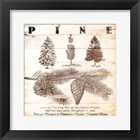 Pine Fine Art Print