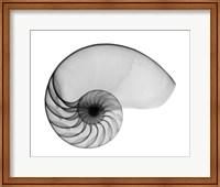 Nautilus Shell Lite X-Ray Fine Art Print