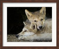 Wolf Pup Brothers Fine Art Print