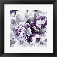 Scent of Roses Plum III Fine Art Print