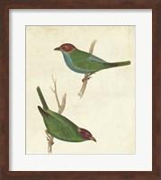Peruvian Tanager II Fine Art Print