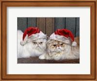 Mad Cats Fine Art Print