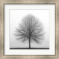 Winter Trio I Fine Art Print