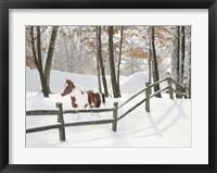 Athena in the Snow, Farmington Hills, Michigan 09 Fine Art Print