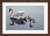 Following Mama Fine Art Print