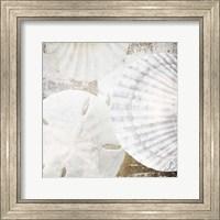 White Shells II Fine Art Print