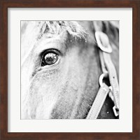 In the Stable I Fine Art Print