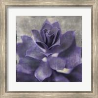 Lavender Succulent I Fine Art Print