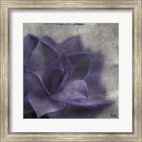 Lavender Succulent II Fine Art Print