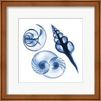 Blue Shells Two Fine Art Print