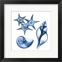 Blue Shells Three Fine Art Print