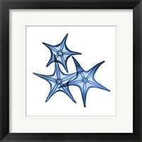 Blue Three Starfish Fine Art Print