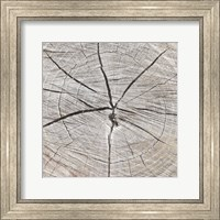 Tree Rings Fine Art Print