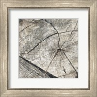 Tree Rings Two Fine Art Print