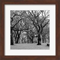 Central Park 2B Fine Art Print