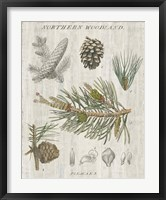 Woodland Chart III Fine Art Print