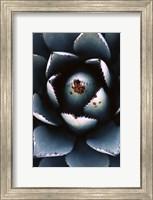 Ladybugs Agave Fine Art Print