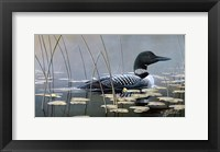 Loon In Reeds Fine Art Print
