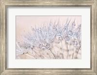 Dandelion Dew II Fine Art Print