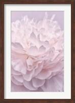 Pink Peony Petals I Fine Art Print