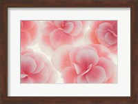 Rose Begonia Flowers Fine Art Print
