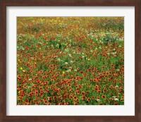 Field in Bloom Fine Art Print