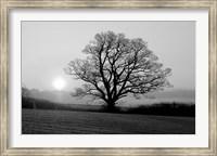 Meadow Tree Fine Art Print