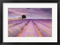 Stone House in Lavender Field Fine Art Print