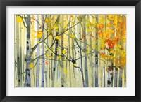 Autumn Birches Fine Art Print