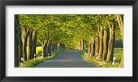 Lime Tree Alley, Mecklenburg Lake District, Germany Fine Art Print