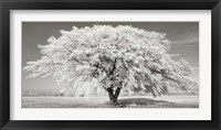 Lime Tree with Frost, Bavaria, Germany Fine Art Print