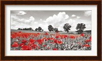 Poppies and Vicias in Meadow, Mecklenburg Lake District, Germany Fine Art Print