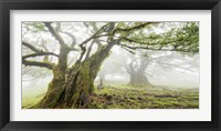 Laurel Forest in Fog, Madeira, Portugal Fine Art Print