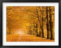 Woods in Autumn Fine Art Print