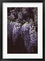 Wisteria Cascade II Fine Art Print