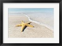 Star Fish Line of Surf Fine Art Print