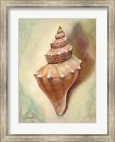 Princess Shell Fine Art Print