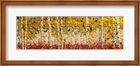 Fall Panoraspen Fine Art Print
