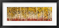 Fall Panoraspen Fine Art Print