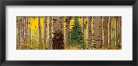 Panor Aspen Lone Pine Fine Art Print