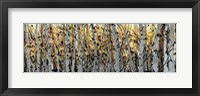 Panor Aspens 1 Fine Art Print